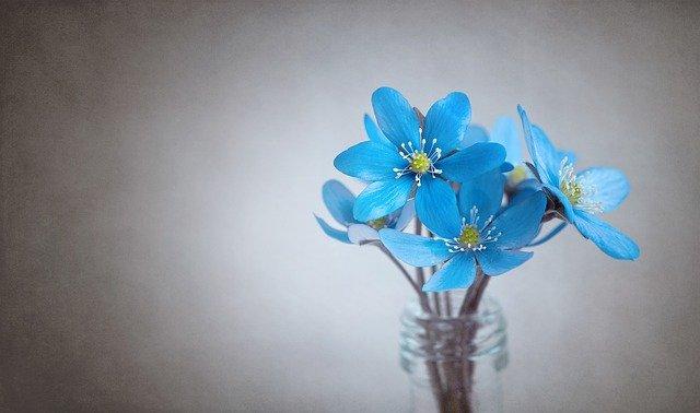 Niebieski dzień